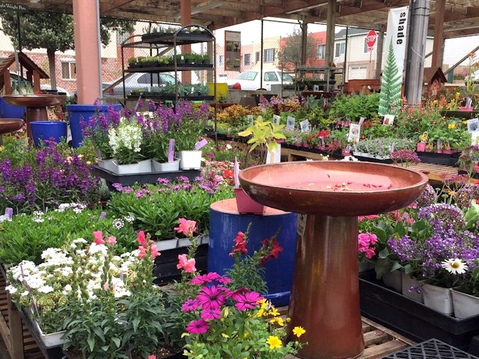 For now outer sunset 39 s sloat garden center is staying put for Outer garden