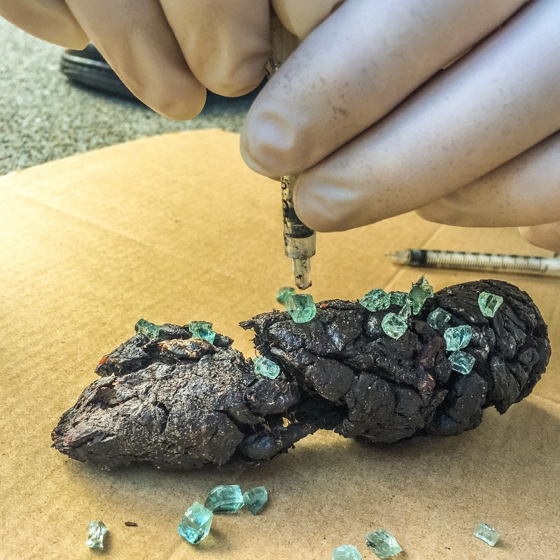 Local Artist Turns SoMa Feces, Syringes Into 'Mouthwatering' Art
