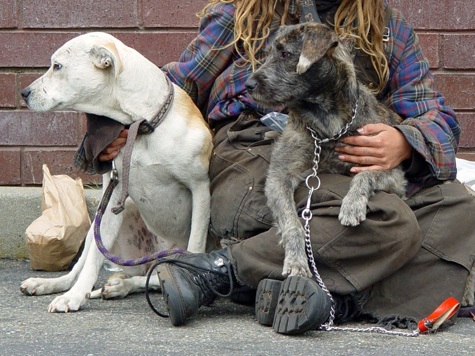Homeless dogs on haight