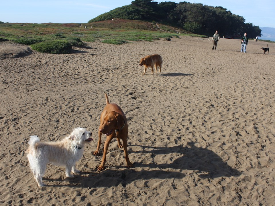 Dogs fort funston