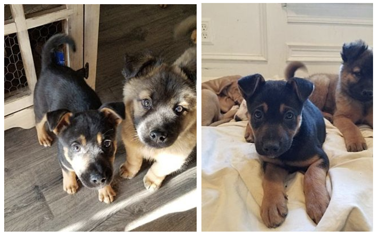 Weekly pup-date: Puppies available now at Raleigh animal