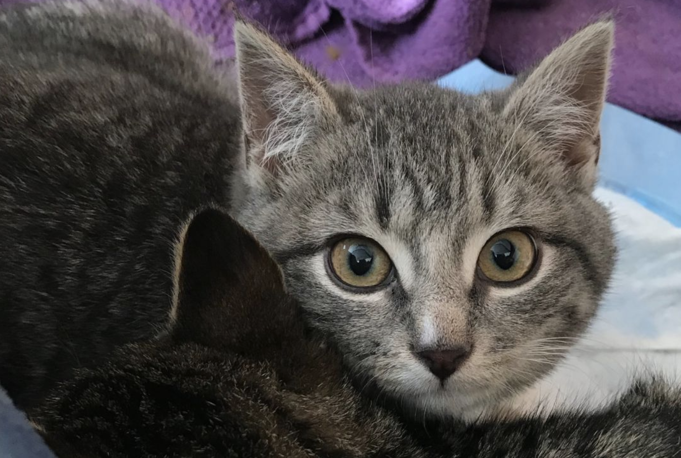 Your Daily Dose Of Cute Kittens Up For Adoption Now In