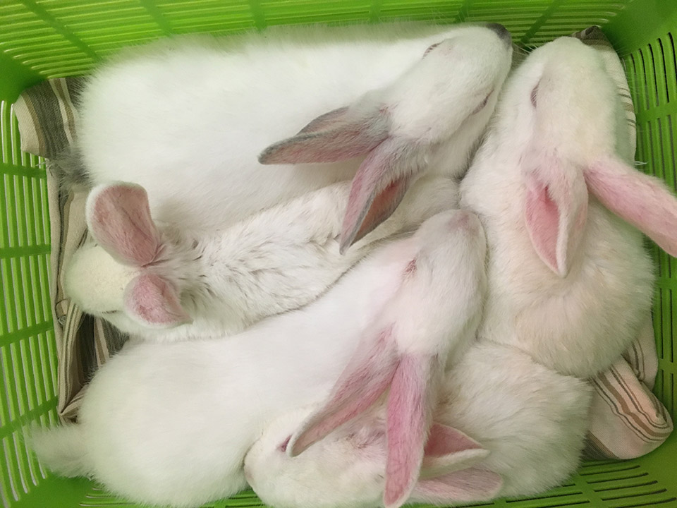 Over 40 Bunnies Up For Adoption, 2 Months After Being ...