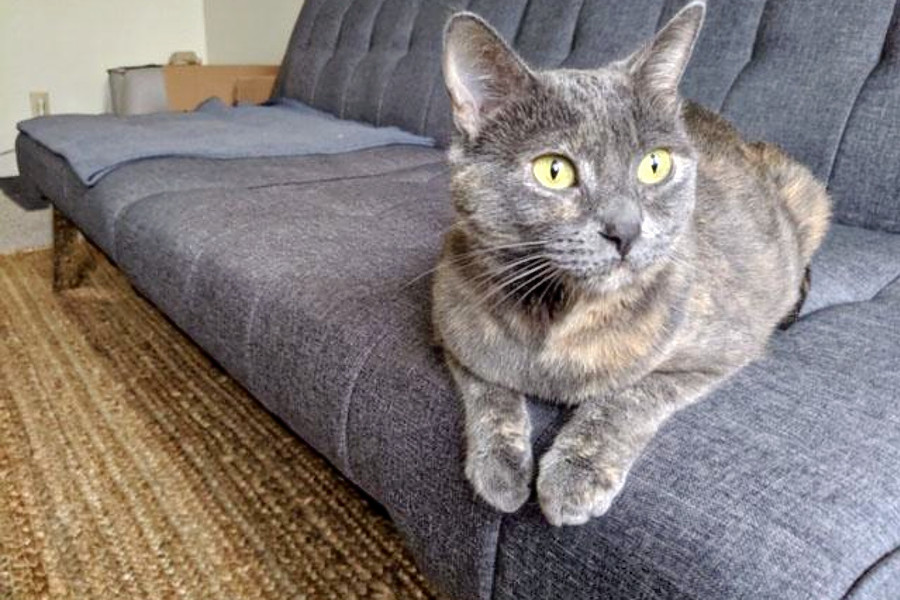 Cats in San Francisco looking for their furr-ever homes