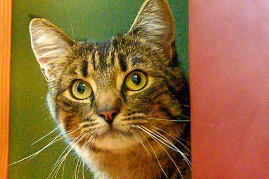 Cats in Oakland looking for their furr-ever homes