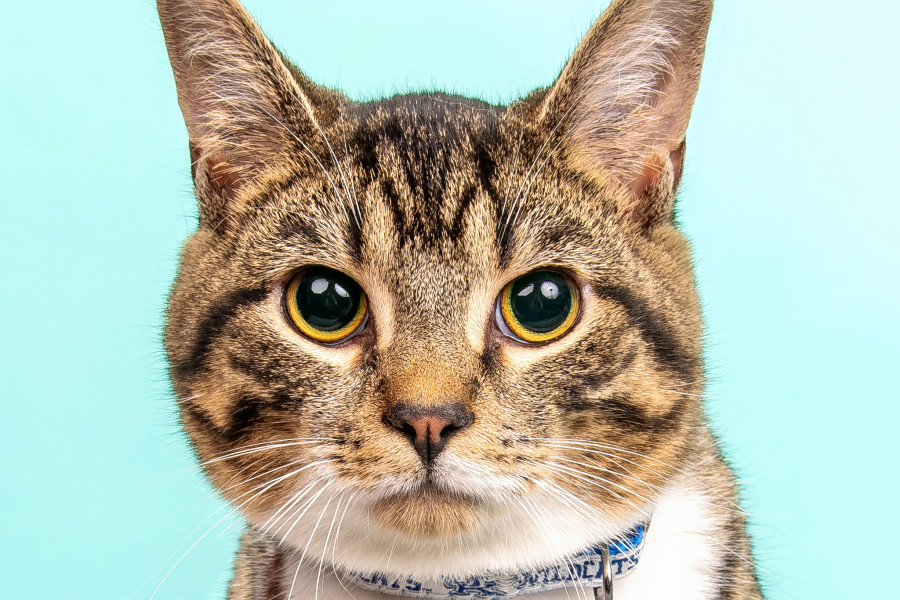 Cats in Cincinnati looking for their furr-ever homes
