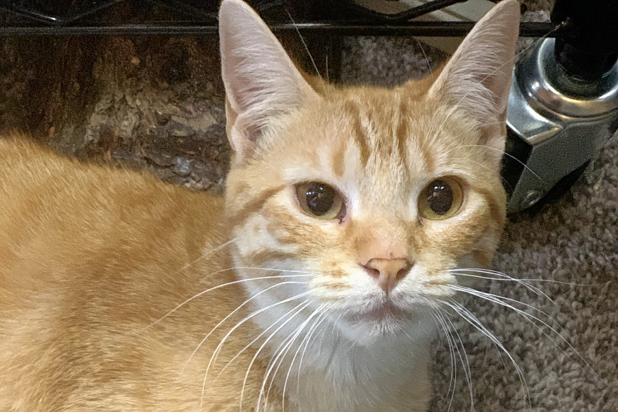 Cats in Oklahoma City looking for their furr-ever homes