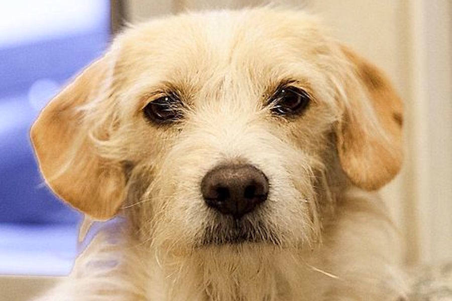 Puppies in Berkeley looking for their fur-ever homes