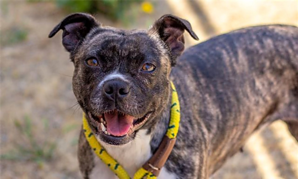 Dogs in San Francisco looking for their fur-ever homes