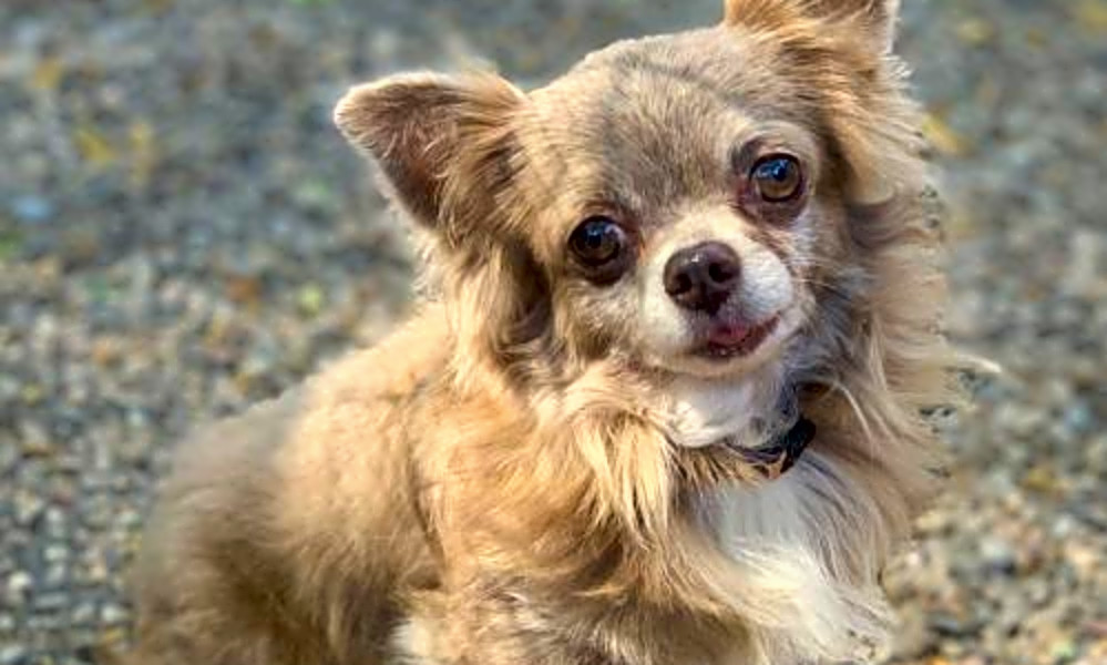 5 lovable pups to adopt now in Oakland