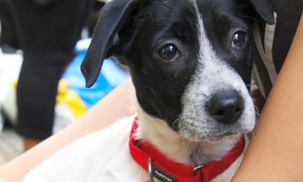 6 precious puppies to adopt now in New York City