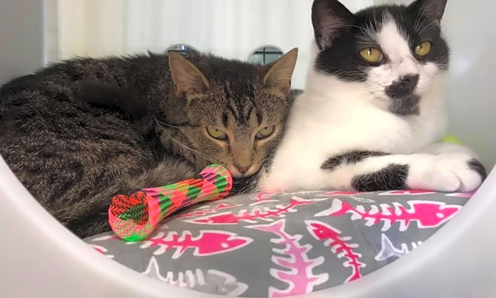 7 charming cats to adopt now in Cleveland