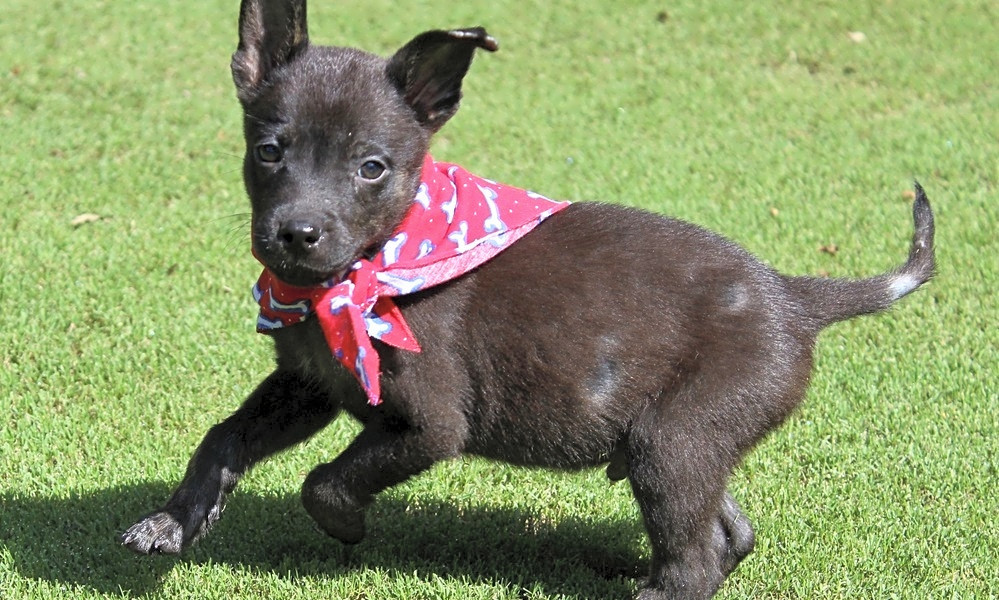 5 perfect pups to adopt now in Atlanta