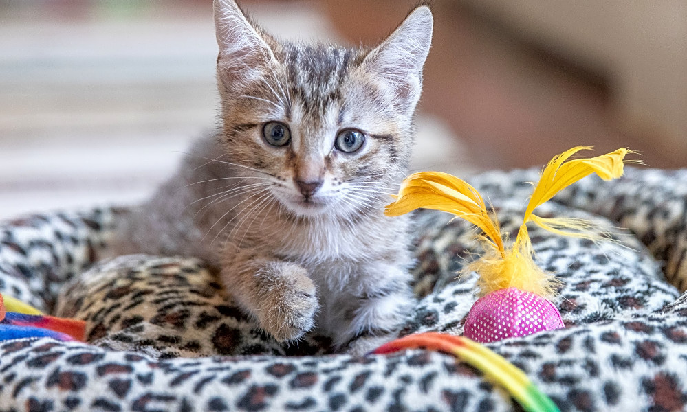 6 lovable kitties to adopt now in San Antonio