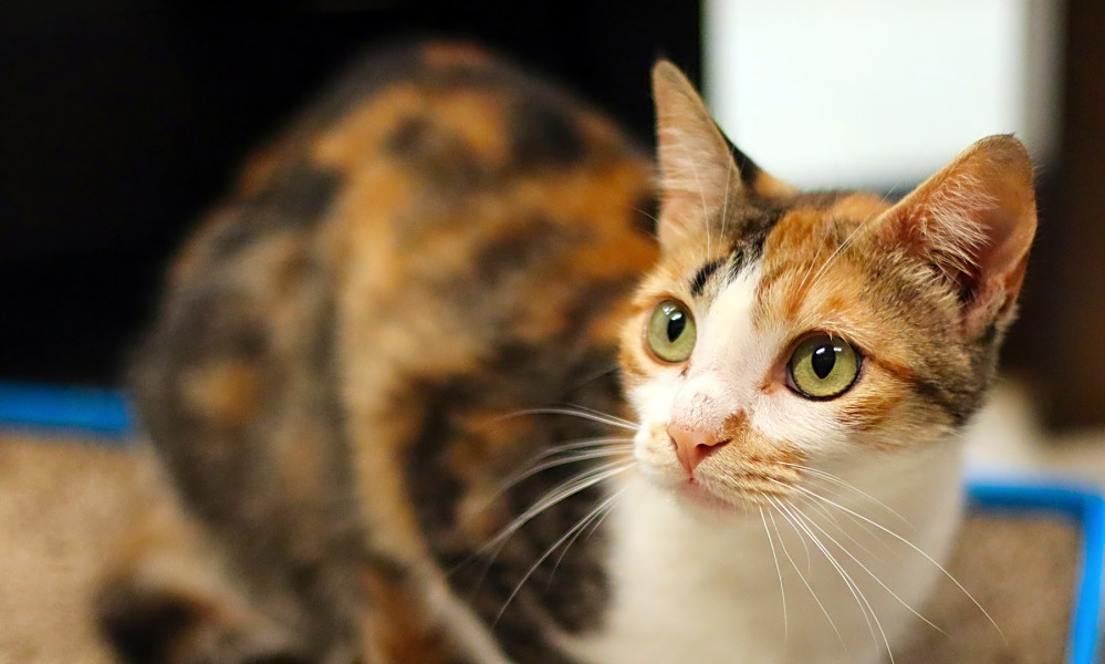 Here are 7 lovable kitties to adopt in San Diego