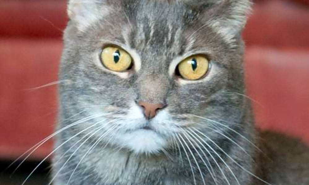 Want to adopt a pet? Here are 6 cute kitties to adopt now in San Jose