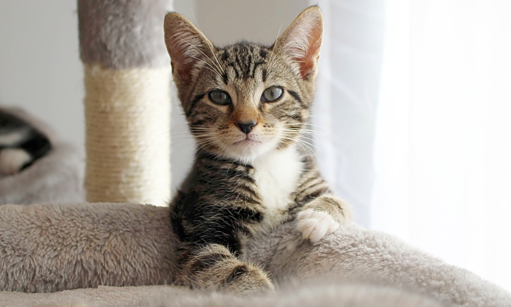 Looking to adopt a pet? Here are 4 cuddly kittens to adopt now in Philadelphia