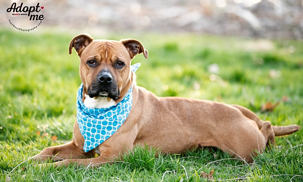 Looking to adopt a pet? Here are 7 lovable pups to adopt now in Kansas City