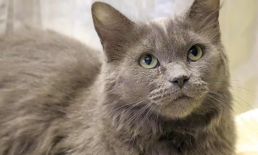 These Washington-based kitties are up for adoption and in need of a good home