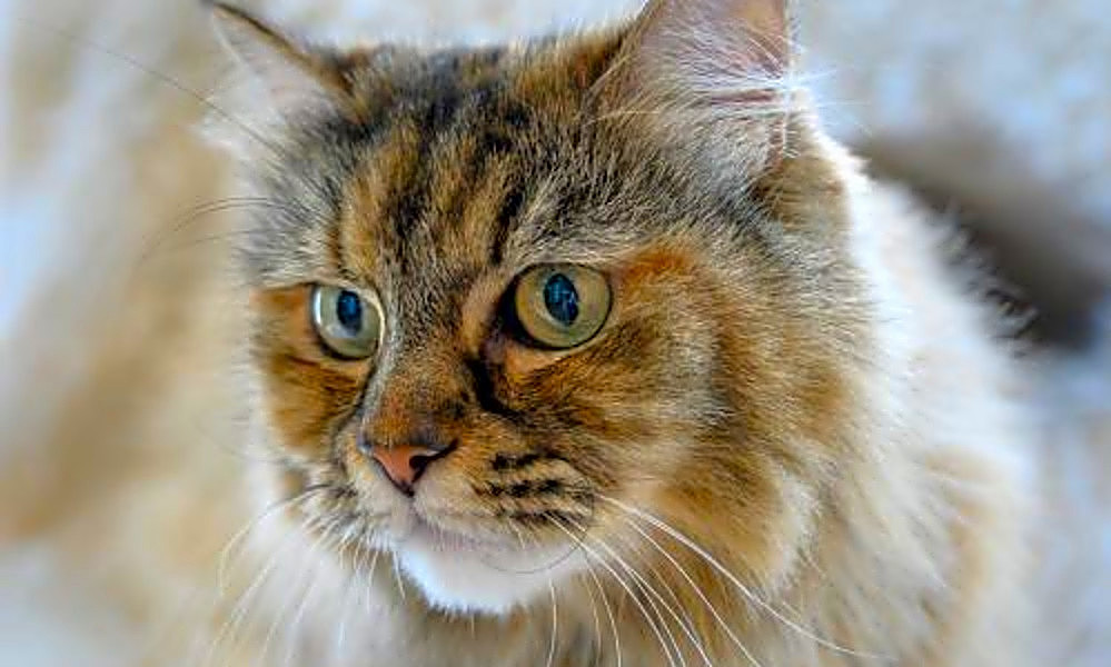 Looking to adopt a pet? Here are 5 furry felines to adopt now in Oakland