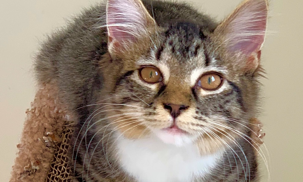 These Cincinnati-based kittens are up for adoption and in need of a good home