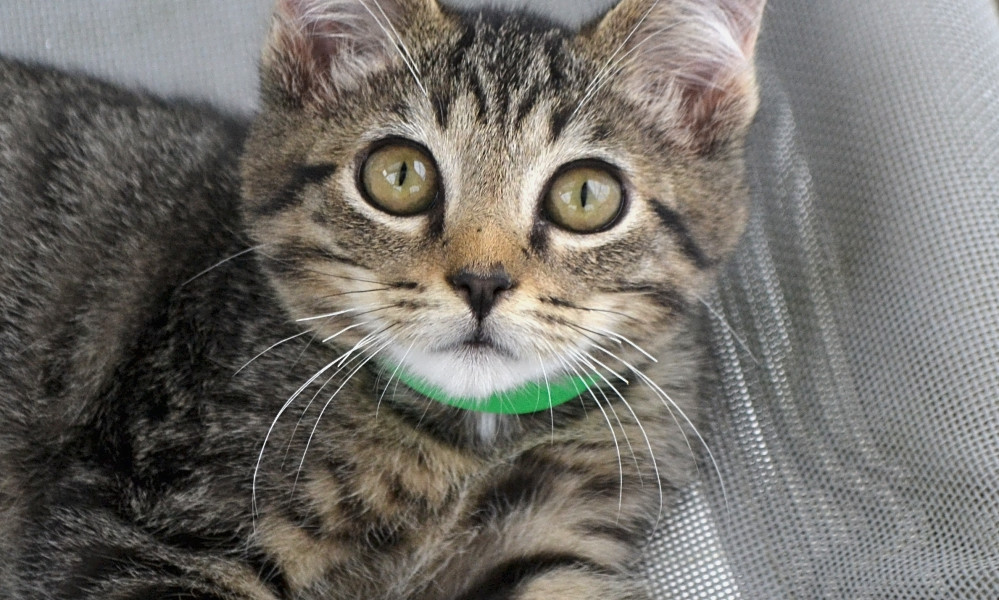 3 cute-as-can-be kittens to adopt now in Pittsburgh