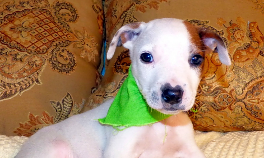 Looking to adopt a pet? Here are 4 cuddly canines to adopt now in Jacksonville
