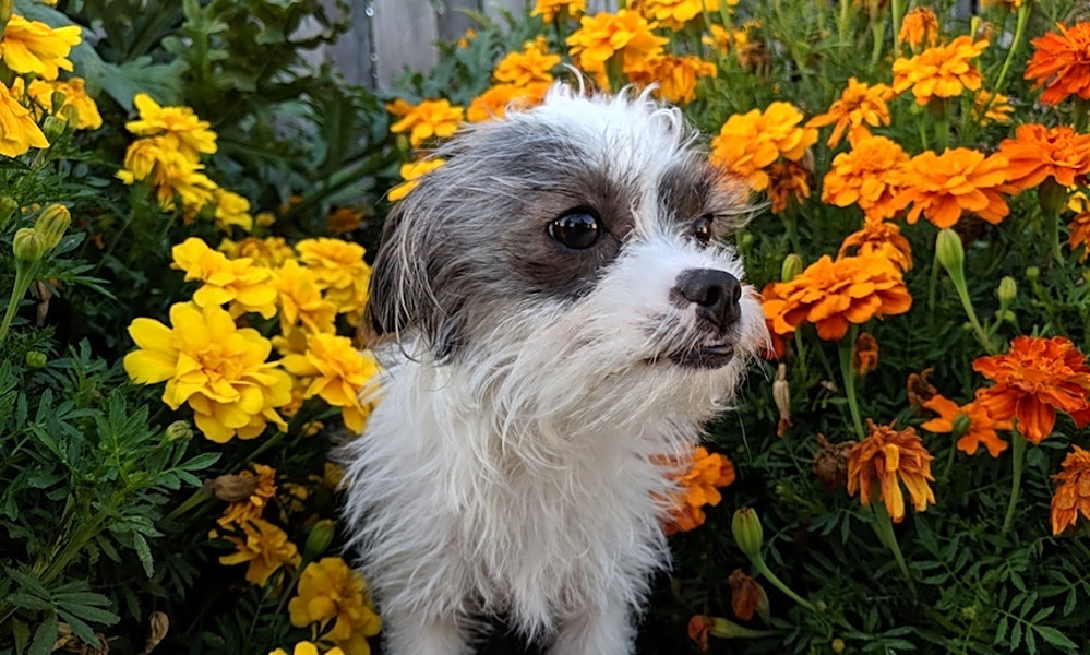 6 lovable pups to adopt now in San Francisco