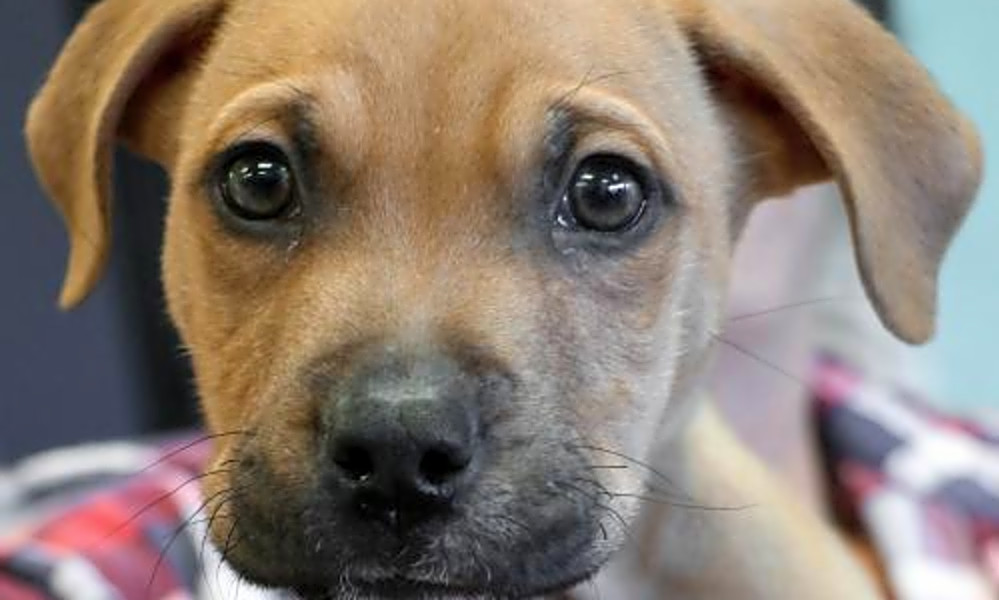 5 cuddly canines to adopt now in Washington