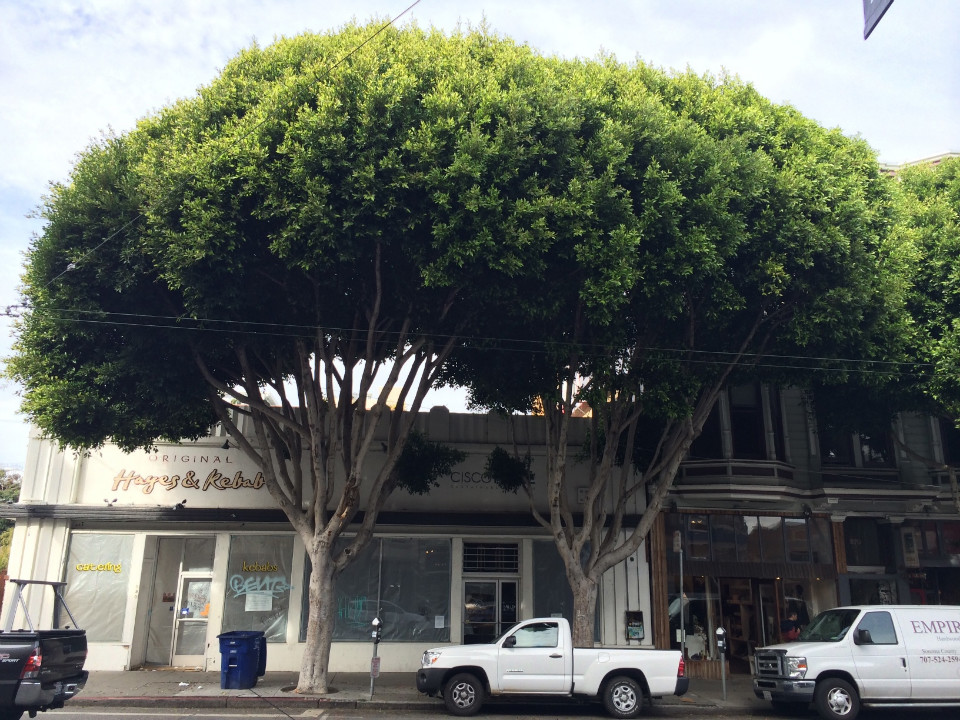 Despite Pushback Trees At 580 Hayes Street To Be Removed